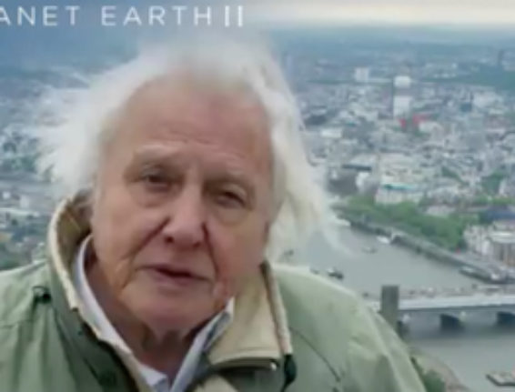 Sir David Attenborough signs off atop of The Shard